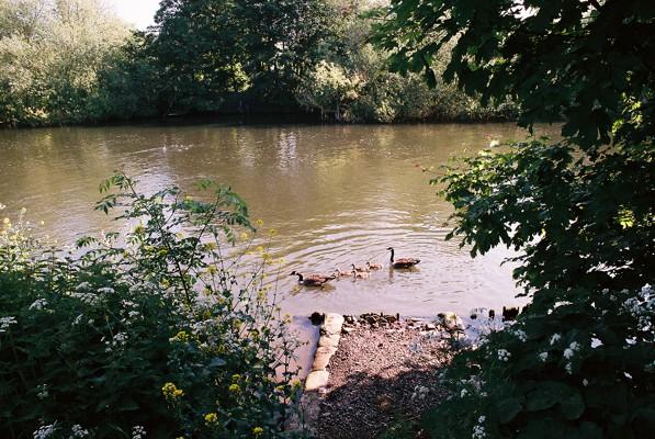 Home Park swim